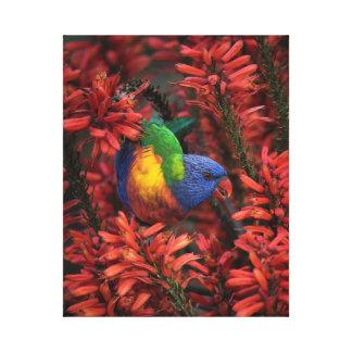 "Rainbow Lorikeet in Vibrant Red Aloe 16x20"" canvas"