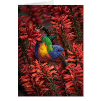 Rainbow Lorikeet in Vibrant Red Aloe greeting card