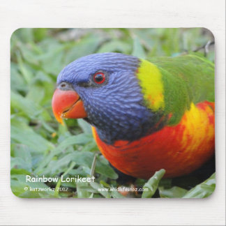 Rainbow Lorikeet Mouse Pad