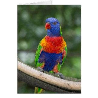 Rainbow Lorikeet Portrait Card