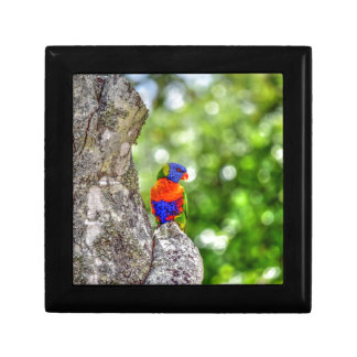 RAINBOW LORIKEET QUEENSLAND AUSTRALIA GIFT BOX