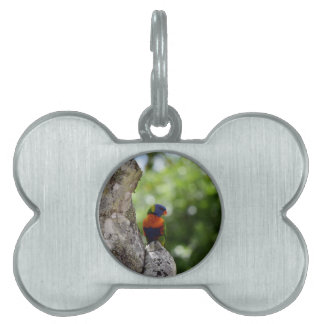 RAINBOW LORIKEET QUEENSLAND AUSTRALIA PET NAME TAG
