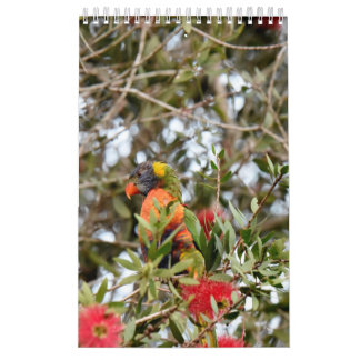 RAINBOW LORIKEET RURAL QUEENSLAND AUSTRALIA CALENDARS