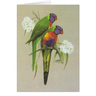Rainbow Lorikeet - Trichoglossus haematodus Card