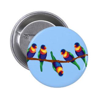 Rainbow lorikeets 2 inch round button
