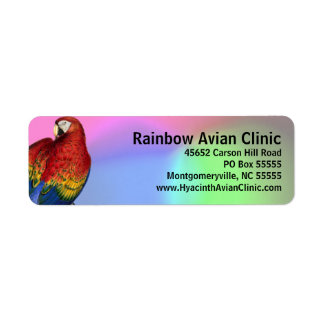 Rainbow Macaw with Colorful Background