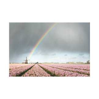 Rainbow over hyacinths and a windmill in Holland Canvas Print