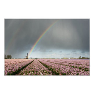 Rainbow over hyacinths and a windmill in Holland Poster