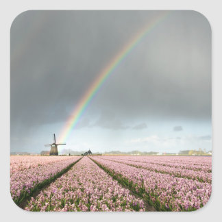 Rainbow over hyacinths and a windmill in Holland Square Sticker