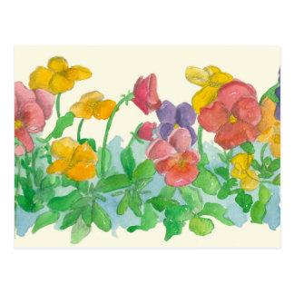 Rainbow Pansy Flowers Watercolor Art Postcard