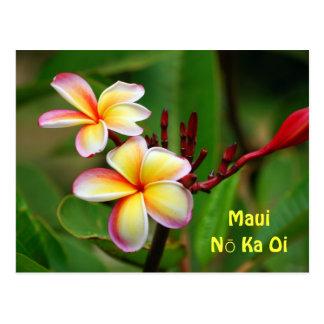 Rainbow Plumeria Flowers, Maui Nō Ka Oi Postcard