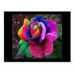 Rainbow Rose Postcard