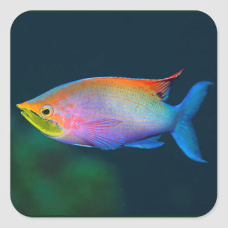 RAINBOW TROPICAL FISH SQUARE STICKERS