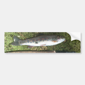 rainbow trout and fly fishing reel bumper sticker