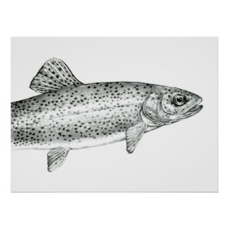 Rainbow Trout Drawing Poster