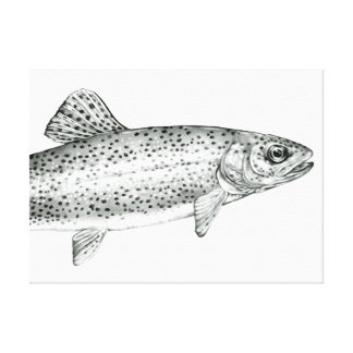 Rainbow Trout Drawing Stretched Canvas Print