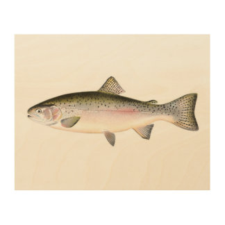 Rainbow Trout Fish Wood Canvases