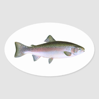 Rainbow Trout Oval Sticker