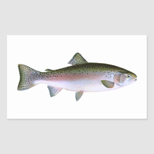 Rainbow Trout Rectangle Sticker