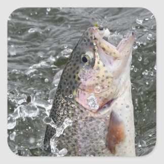 Rainbow Trout Takes The Bait Square Sticker