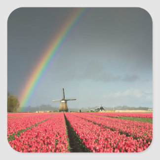 Rainbow, tulips and windmill sticker