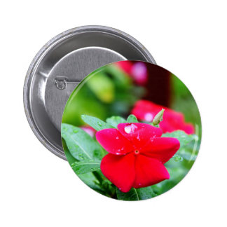 RAINDROP ON PINK FLOWER QUEENSLAND AUSTRALIA 2 INCH ROUND BUTTON
