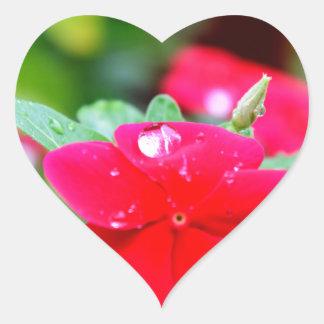 RAINDROP ON PINK FLOWER QUEENSLAND AUSTRALIA HEART STICKER