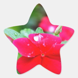 RAINDROP ON PINK FLOWER QUEENSLAND AUSTRALIA STAR STICKER