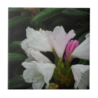 Raindrop on Rhododendrons Tile