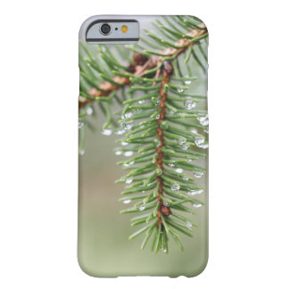Raindrop Pine Tree, Macro Nature Photography Barely There iPhone 6 Case