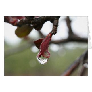 Raindrop Reflection Blank Card