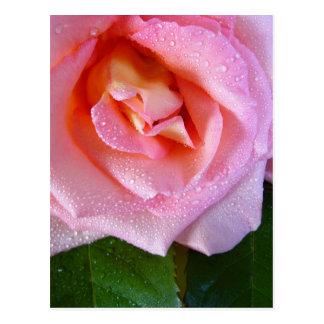 raindrop-rose postcard