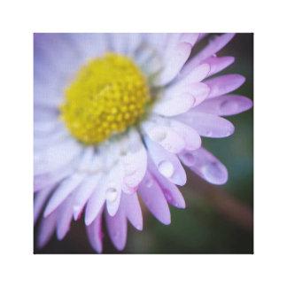 Raindrops on a daisy canvas print