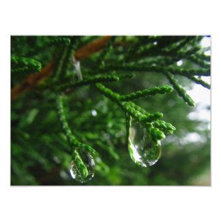 Raindrops on a tree branch art photo