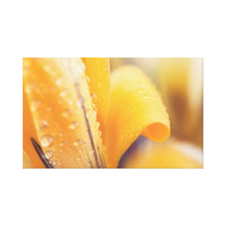 Raindrops on a yellow winter flower canvas print