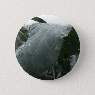 Raindrops on cauliflower leaves 2 inch round button