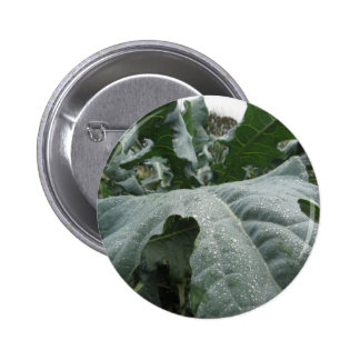 Raindrops on cauliflower leaves 2 inch round button