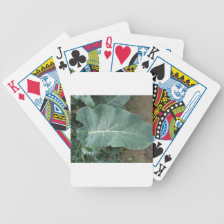 Raindrops on cauliflower leaves bicycle playing cards