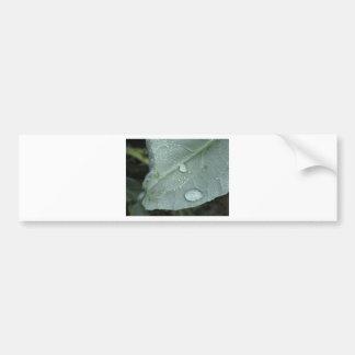 Raindrops on cauliflower leaves bumper sticker