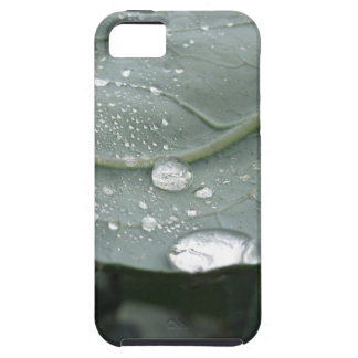 Raindrops on cauliflower leaves case for the iPhone 5