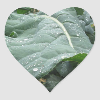 Raindrops on cauliflower leaves heart sticker