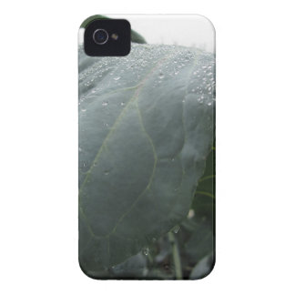 Raindrops on cauliflower leaves iPhone 4 Case-Mate case