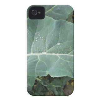 Raindrops on cauliflower leaves iPhone 4 Case-Mate cases