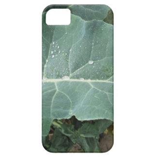 Raindrops on cauliflower leaves iPhone 5 case