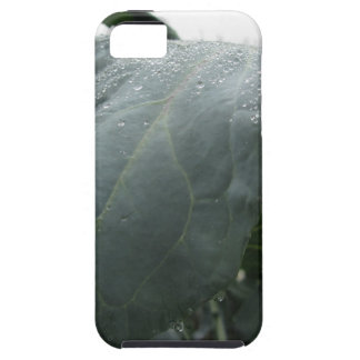 Raindrops on cauliflower leaves iPhone 5 cases