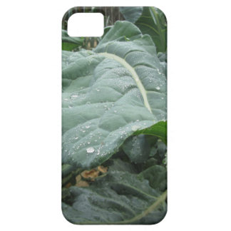 Raindrops on cauliflower leaves iPhone 5 cover