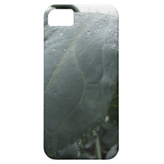 Raindrops on cauliflower leaves iPhone 5 covers