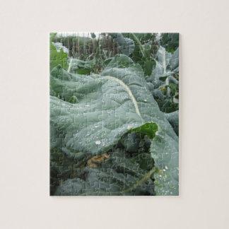 Raindrops on cauliflower leaves jigsaw puzzle