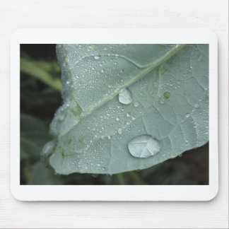 Raindrops on cauliflower leaves mouse pad