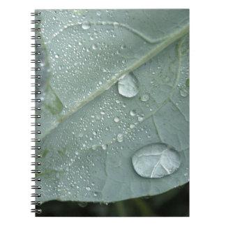 Raindrops on cauliflower leaves notebooks